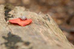 WEB ONLINE USE Allison & Dave Engagement Oct 29 2015 (26)